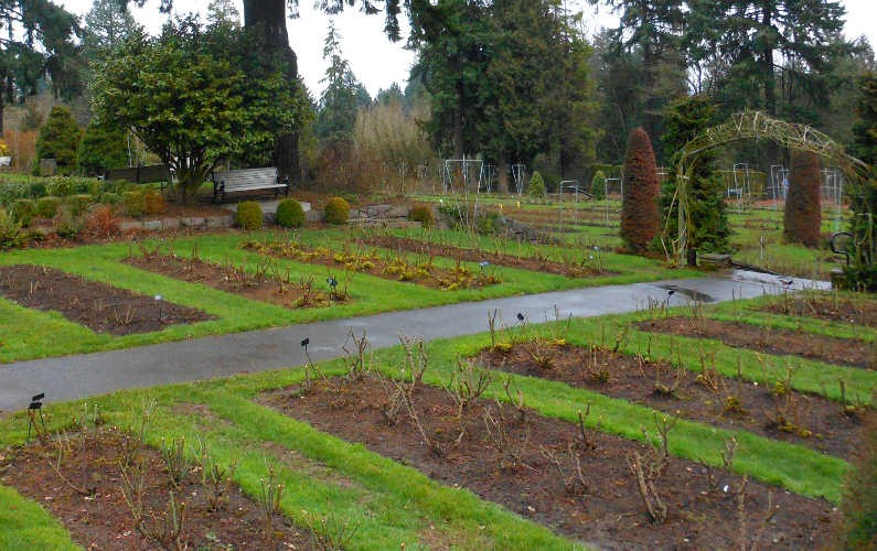 Empty Rose Bushes at Portland's International Rose Garden During the Winter