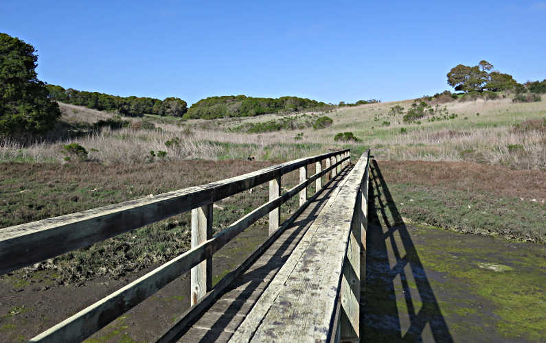 A Wooden Walk Way Leading into the Hills From the Water at Elkhorn Slough