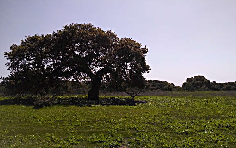 A Tree at the Elkhorn Slough National Estuarine Research Reserve