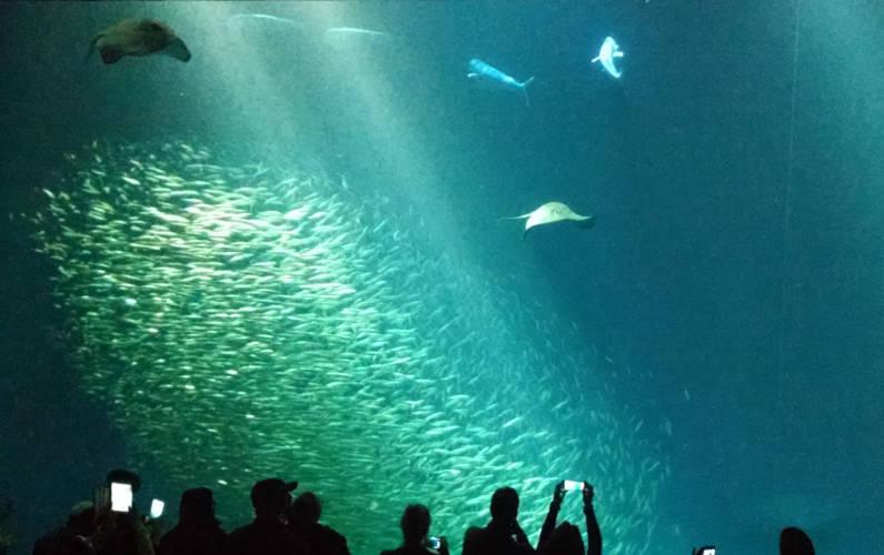 People Looking at the Various Sea Life in the Large Aquarium at Monterey Bay Aquarium