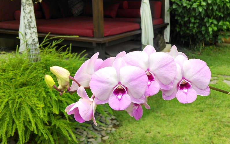 Villa Blubambu Flowers