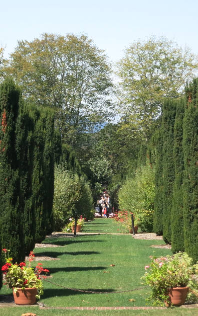 Another Rows of Shaped Bushes Forming a Path at Filoli