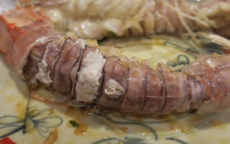 Close Up of Indochina Junk Mantis Shrimp