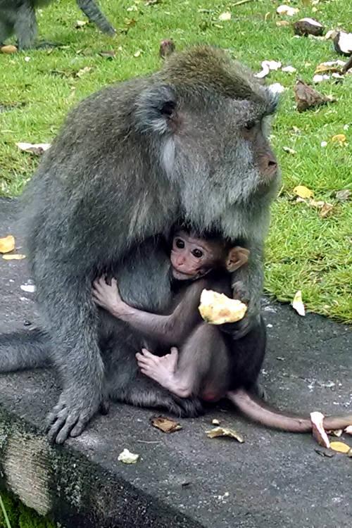 Baby Monkey Forest Bali 04