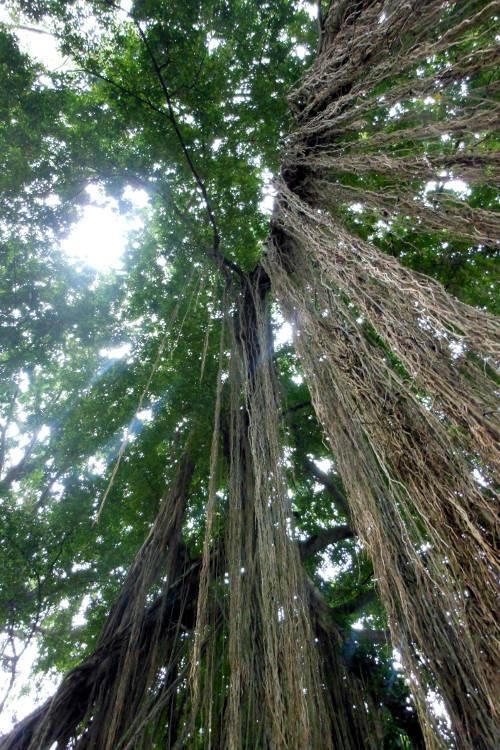 Canopy Monkey Forest Bali