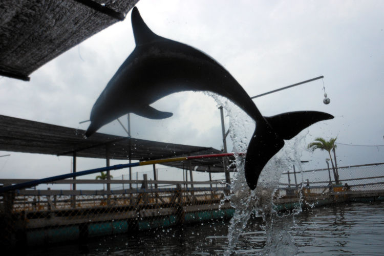 Dolphin Lodge Bali 05