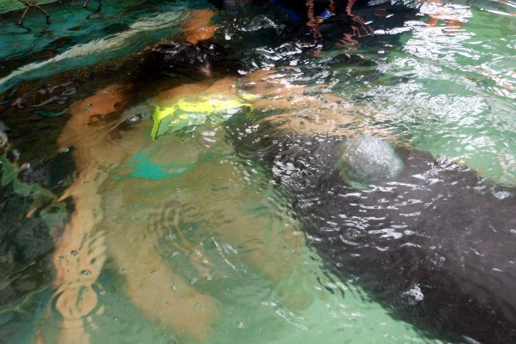 Nadia Dolphin Lodge Bali 09