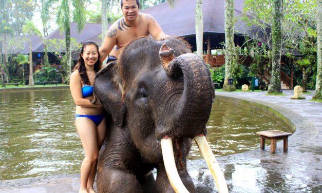 Bathing with Elephants at Bali Mason Elephant Lodge