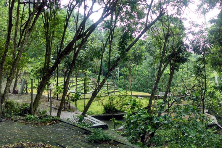 Open Area Monkey Forest Bali