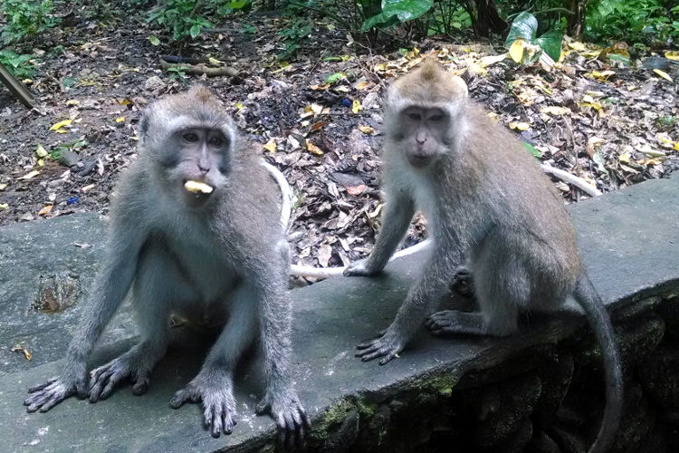 Seeing Double Monkey Forest Bali