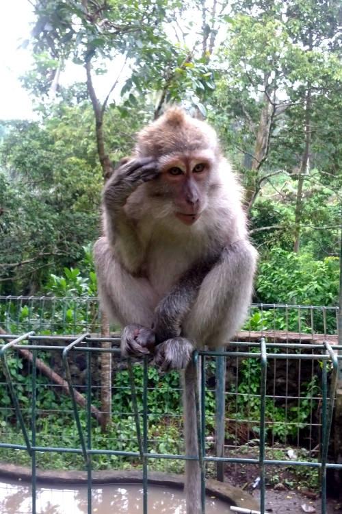 Thinking Monkey Forest Bali