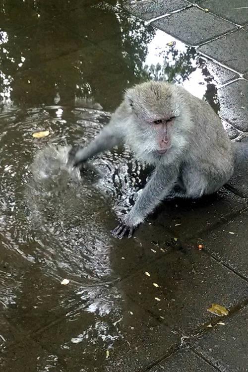 Water Monkey Forest Bali