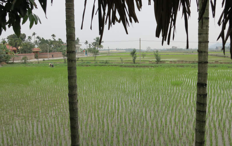 View of Rice Paddy Fields at the End of the Indochina Junk Tour