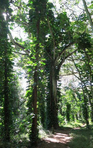 light hoopi falls Kauai HI (5)