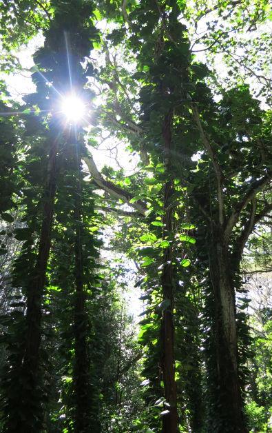 light hoopi falls Kauai HI (8)
