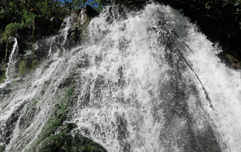 Going Through Kauai's Jungle to Find Ho'opi'i Falls