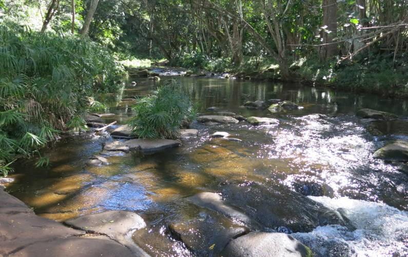 stream hoopi falls Kauai HI (13)