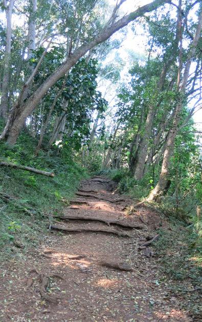 trail hoopi falls Kauai HI (102)