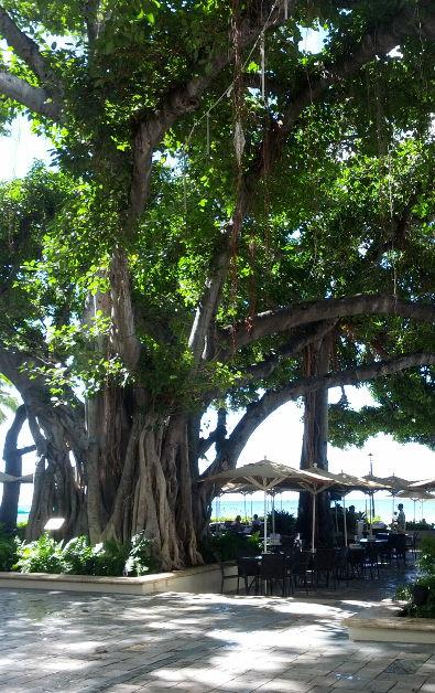 Waikiki Oahu (3)