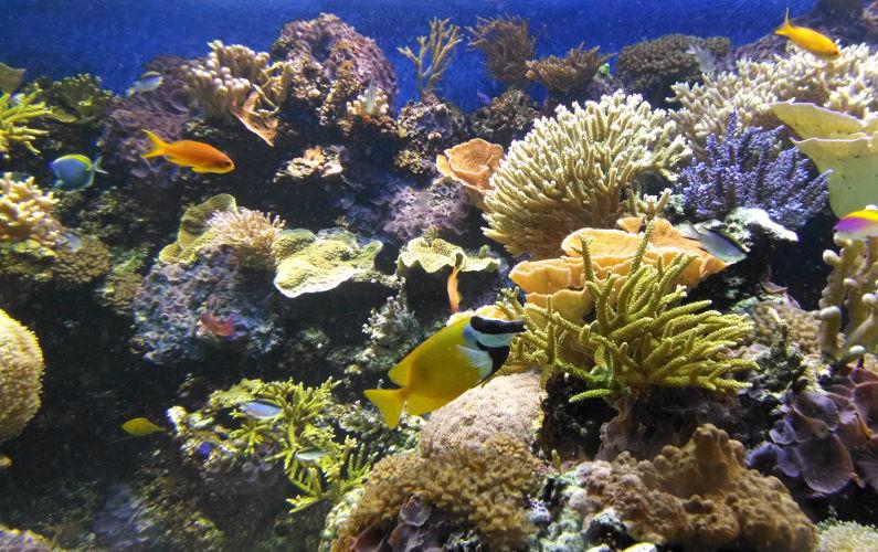 Fish and Coral at the Vancouver Aquarium