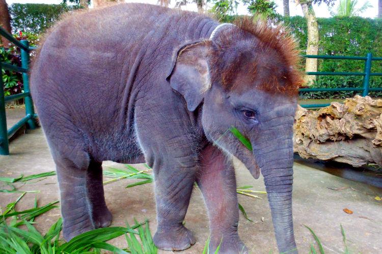 Elephants of Bali Mason Elephant Lodge