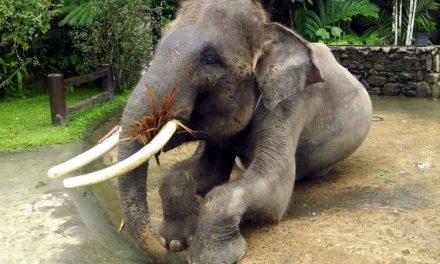 Staying at the Bali Mason Elephant Lodge