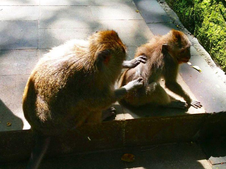 2 Monkeys in the Monkey Forest in Bali