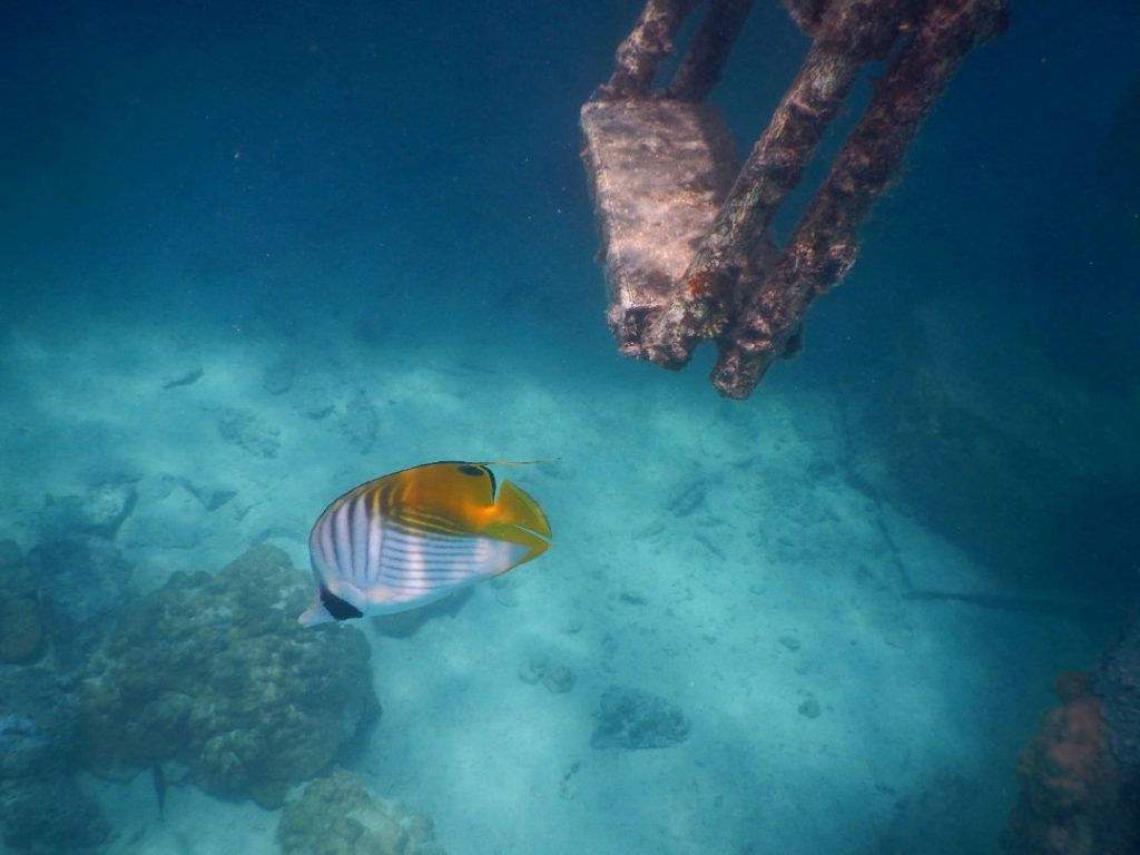 Fish at the base of our Intercontiental Bora Bora suite water ladder French Polynesia
