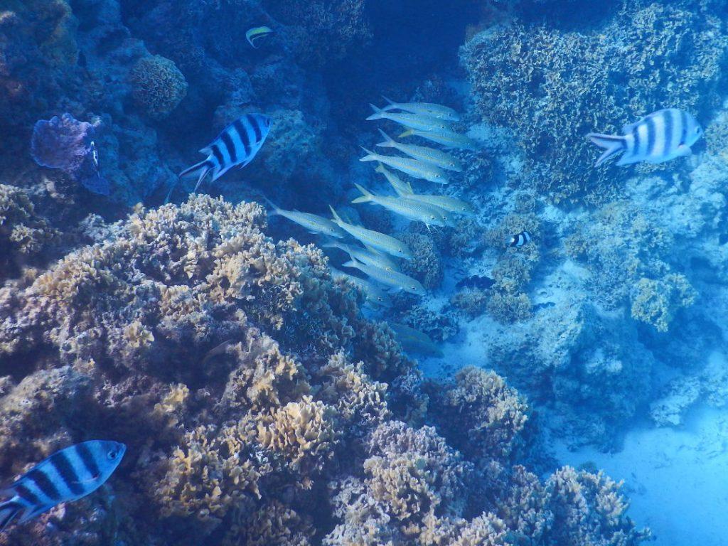 Schools of fish and coral reef in Bora Bora French Polynesia 02