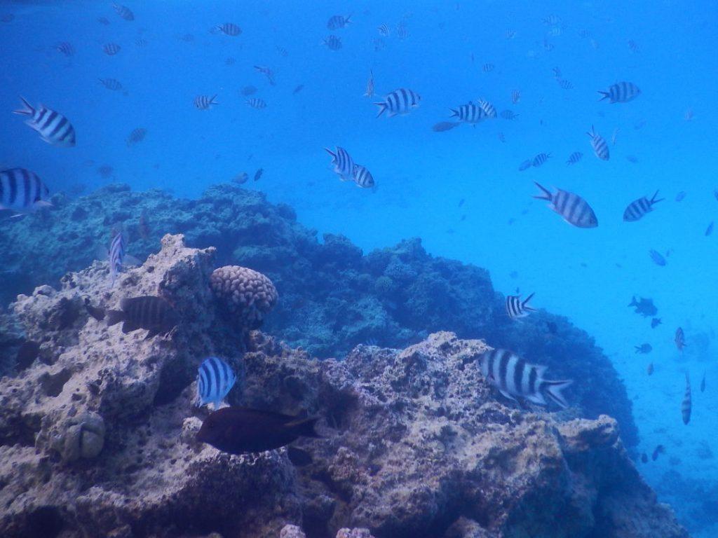 Schools of fish and coral reef in Bora Bora French Polynesia