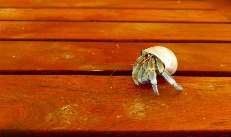 Conrad Maldives Hermit Crab