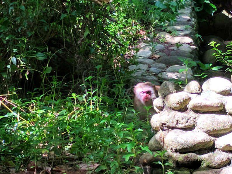 Monkey at the Intercontinental Da Nang