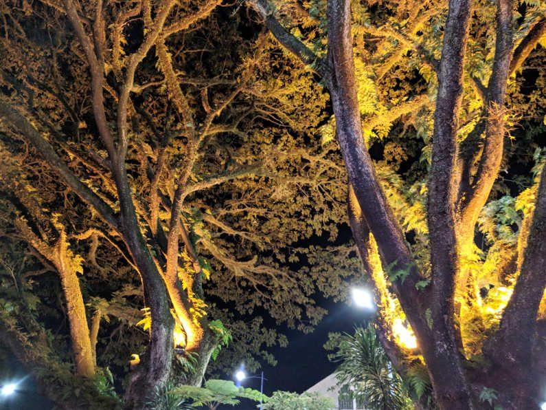 Trees in Bandung Indonesia