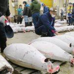 18 Tokyo Photos of the Old Tsukiji Market Tuna Auction