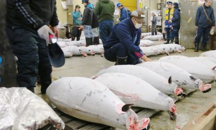 18 Tokyo Photos of the Old Tsukiji Market Tuna Auction