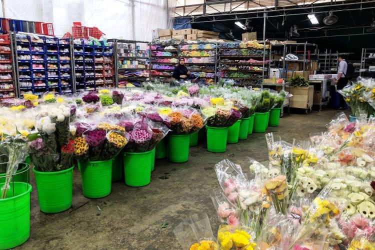 Singapore Far East Orchid Alternative Flowers
