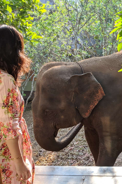 Chiang Mai Chai Lai Orchid Nadia and Elephant