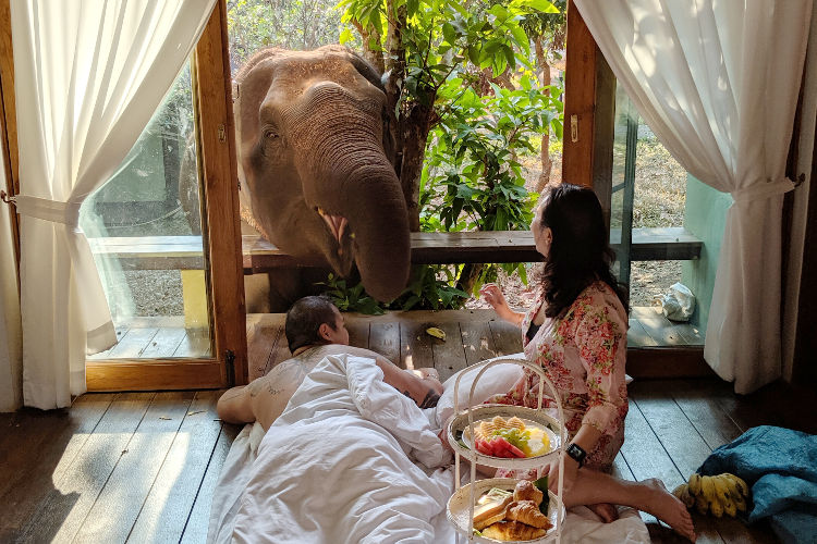 Elephant Wake Up Call at Chai Lai Orchid