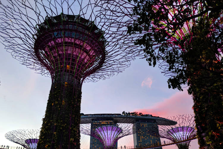 Supertree Night Lights MBS Singapore