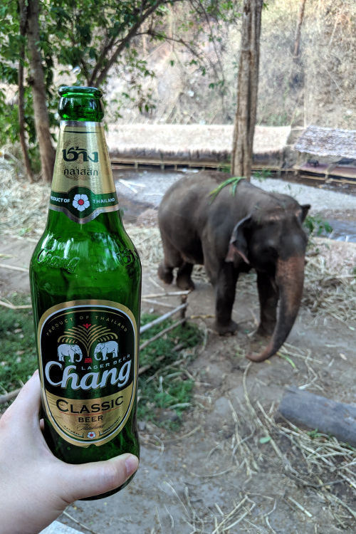 Beer Elephants of Chai Lai Chiang Mai 2019