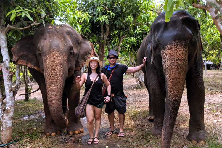 Taking a Walk on the Wild Side with Elephants