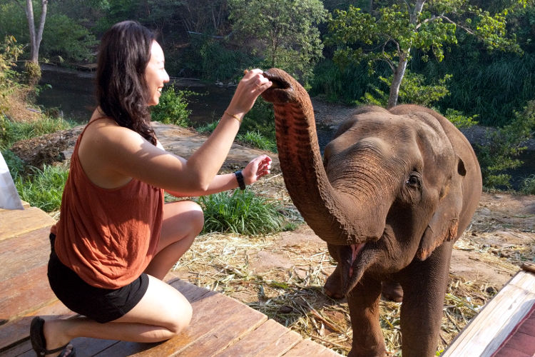 Elephants of Chai Lai Orchid